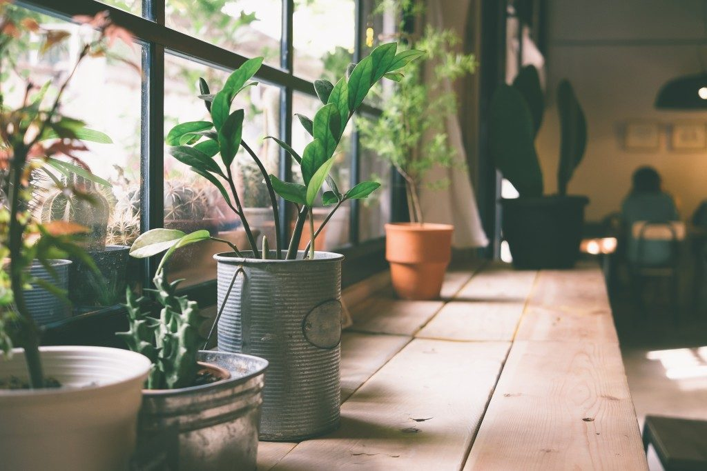 small pots for indoor plants