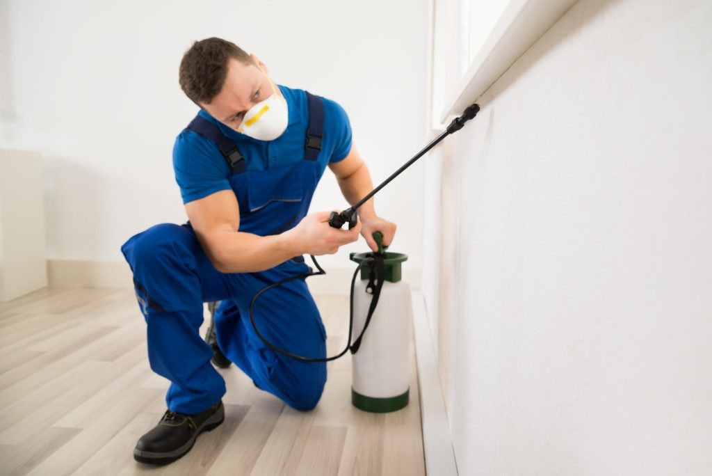 Pest control spraying pesticide