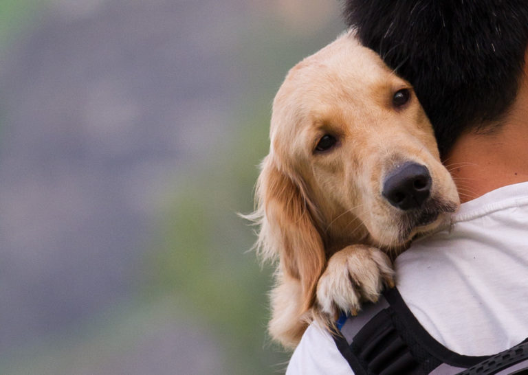 dog well cared for